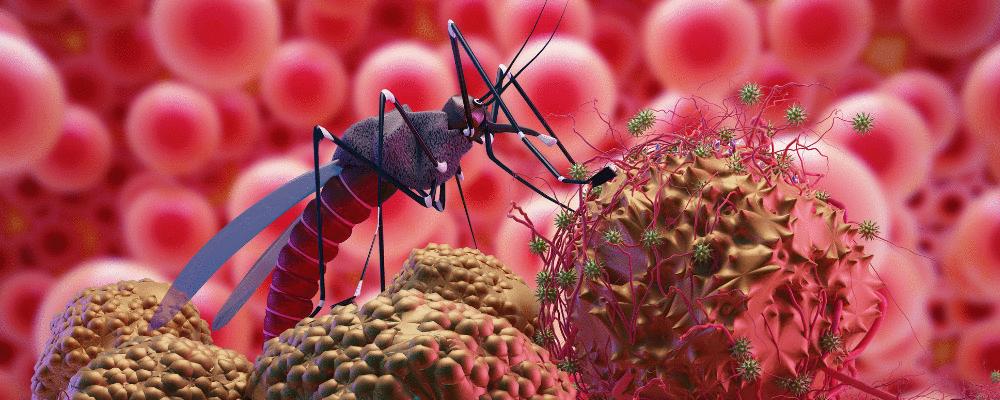 Pesquisadores desenvolvem anticorpo monoclonal  para prevenção da Malária