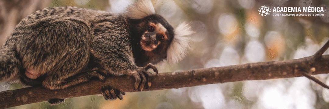 Zika vírus: combatendo mosquitos e descobrindo macacos
