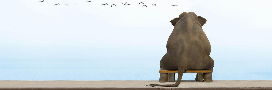 Médicos domadores de elefantes