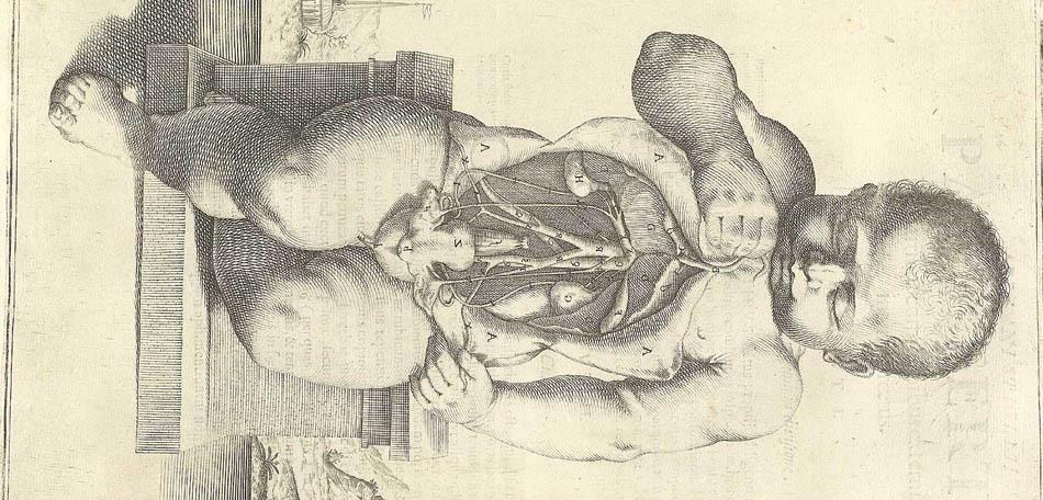 Os primeiros estudos anatômicos: Spiegel