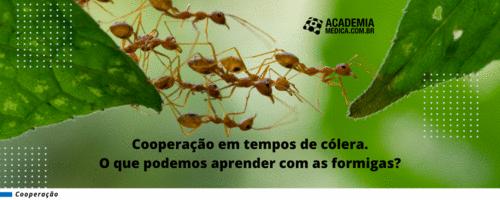 Cooperação em tempos de cólera. O que podemos aprender com as formigas?