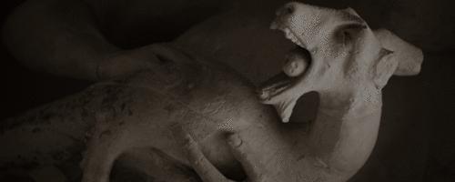 Gabinete de Curiosidades Médicas: O Curioso Mundo da Taxidermia Vitoriana