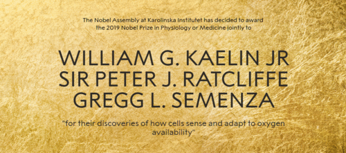 Nobel de Medicina e Fisiologia 2019: Adaptabilidade celular frente a disponibilidade de Oxigênio