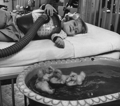 Animais fazem um hospital feliz! Fotos clássicas de bichos ajudando crianças